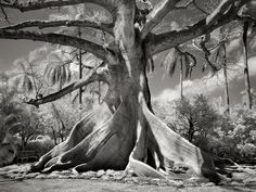 """""""Portraits of Time"""", Beth Moon"""