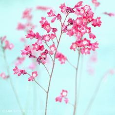 Lovely Flower Photography by Mia Minor