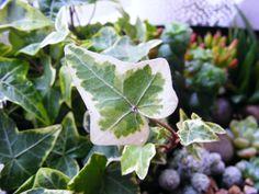 love plants :)