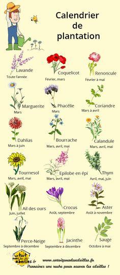 Calendrier de plantation des fleurs pour les abeilles