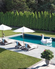 Having a pool sounds awesome especially if you are working with the best backyard pool landscaping ideas there is. How you design a proper backyard with a pool matters. Backyard Pool Landscaping, Backyard Pool Designs, Swimming Pools Backyard, Swimming Pool Designs, Backyard Ideas, Landscaping Ideas, Backyard Privacy, Pool Fence, Pool Decks
