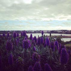 #warrnambool #victoria #australia #lake #plants #flowers by goodfield83