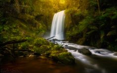 The sun breaks through the rainforest canopy at Hopetoun Falls in the Otway Ranges