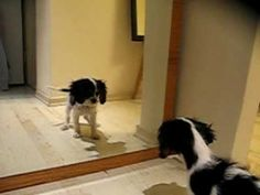 """""""Trico - 3 months old - discovers the mirror"""""""