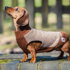 dachshund gloucester sleeveless tweed jumper by redhound for dogs   notonthehighstreet.com