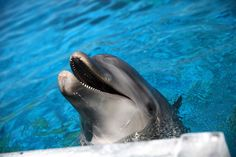 Activists are seeking to derail the $20 million attraction, which they say could harm both dolphins and humans.