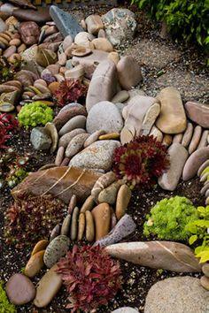 Rock garden with succulents