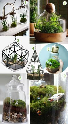 Idea for indoor plants/decor - easy to maintain, quirky, fun (fairly new and unseen trend in asia). can be placed in simple pickling jars of different sizes, adorned with small figurines (such as deers, little people misbehaving - black sheep...)