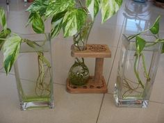 potus baño Plantas Indoor, Terrarium, New Roots, Diy Plant Stand, Different Plants, Aquatic Plants, Propagation, Green Plants, Feng Shui