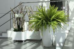 #decorations for #fair: room #divider: fern and #module system with birch on rollers, Raumteiler mit Birke und Orchidee, Modulsystem auf Rollen, Bodenvase mit Farn, #Messe #Hamburg, photo Birgit Puck