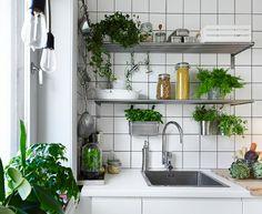 white + plants   via Coco Lapine
