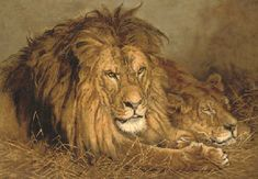 * After Geza Vestagh (Hungarian, Repose, Lion and Lioness, published by Pears Shop color lithograp Your Paintings, Animal Paintings, Lion Species, Wall Prints, Poster Prints, British Lions, Lion And Lioness, Lion Painting, Old King