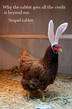 The disgruntled Easter Chicken - I couldn't wait until Easter to post this :)