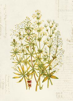 Botánico Vintage Floral en francés articles impresión 8 x 10