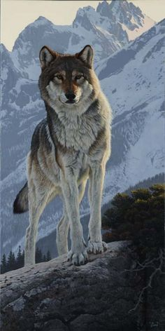 """""""The Surveyor"""" – wolf painting by Al Agnew. Wolves remind the elders among us to… """"The Surveyor"""" – wolf painting by Al Agnew. Wolf Photos, Wolf Pictures, Animal Pictures, Wildlife Paintings, Wildlife Art, Animal Paintings, Beautiful Wolves, Animals Beautiful, Cute Animals"""