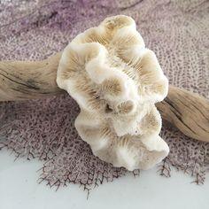 Natural Sea Coral Fossils, Small Aquarium Decor, Fish Tanks, Collectible, White
