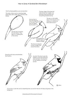 Drawing Realistic Skin How to Draw Worksheets for The Young Artist: How to Draw A Cardinal Bird Worksheet Drawing Lessons, Drawing Techniques, Drawing Tips, Art Lessons, Painting & Drawing, Drawing Drawing, Teaching Drawing, Drawing Tutorials, Figure Drawing