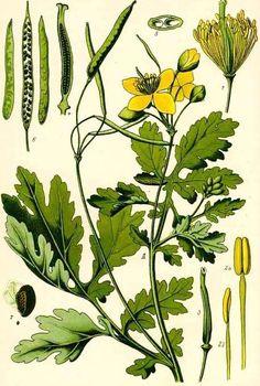 Sciatica, Pisa, Natural Remedies, Plant Leaves, Health, Nature, Medicine, Therapy, Plant