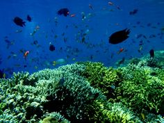 weekend and snorkeling, sounds great. we offer you 1 trip snorkeling for USD 25 include Mask, Snorkel, Wetsuit and Fin all include tax and service
