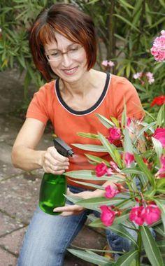 Tipps zum Überwintern von Kübelpflanzen -  Mit den ersten Frösten ist die Freiluftsaison für exotische Kübelpflanzen vorbei. Jetzt gilt es, das geeignete Winterquartier zu finden und die Pflanzen mit der richtigen Pflege unbeschadet durch die kalte Jahreszeit zu bringen.