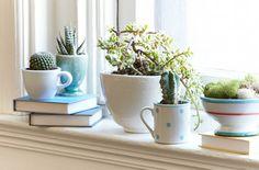 Indoor Dish Garden