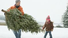 Bad news, folks: While you may want your fresh tree to last well into the New Year, it actually doesn't take more than a few days of heat and neglect to dry out a fresh one. With proper care, most trees can last five weeks or more.