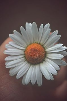 This shows radial balance because the middle of the flower is yellow which is the circular part or the middle and the white petals surround that. Rare Flowers, Flowers Nature, Unique Flowers, Radial Balance, Alaska Young, Sunflower Photography, Photography Flowers, Photographs Of People, Flower Petals