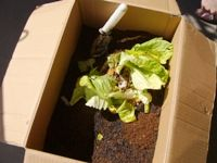 cardboard compost idea/ S夫人に聞く、ダンボールコンポストレシピ [シンプルライフ] All About Green Garden, Hydroponics, Compost, Diy And Crafts, Eco Friendly, Planters, Backyard, Gardening, Flowers