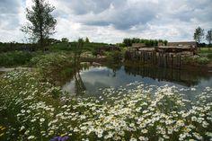 De buurtvijver: een oase voor mens en dier