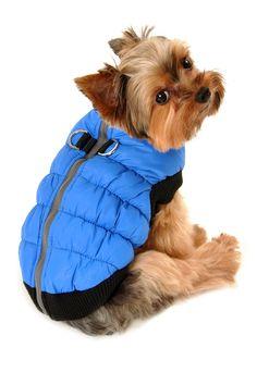 Blue Crown Puffer Vest by Hip Doggie on @HauteLook