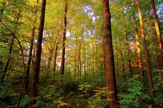 CANADIAN forest - Google Search