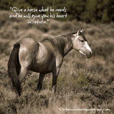 Nimbus from Sand Wash Basin Wild Horse Herd by ThruWildEyes, $37.50