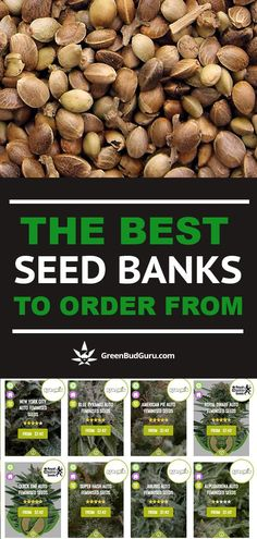 With hundreds of online seed banks out there to choose from, it can be difficult to which ones to order from. This article provides a detailed guide to buying seeds online, as well as a complete list of the best seed banks to order from. Cannabis Cultivation, Cannabis Edibles, Cannabis Plant, Cannabis Seeds Online, Buy Weed Seeds Online, Growing Weed, Cannabis Growing, Weed Seed Bank, Gardens