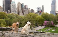 Best NYC Neighborhoods for Dogs