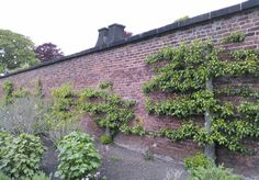 Solar Heated fruit wall http://www.resilience.org/stories/2016-01-06/fruit-walls-urban-farming-in-the-1600s