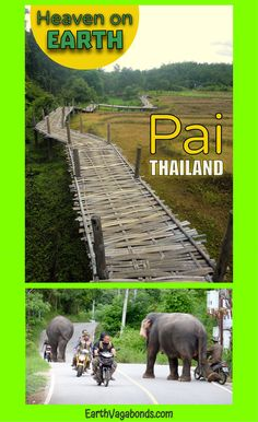 From odd land formations to gorgeous views on hikes, Pai is a must-see place in Northern Thailand for budget travelers who like a quiet scene. Pai Thailand, Northern Thailand, Elephant Walk, Heaven On Earth, Elephants, Fields, Attraction, Trainers, Hiking