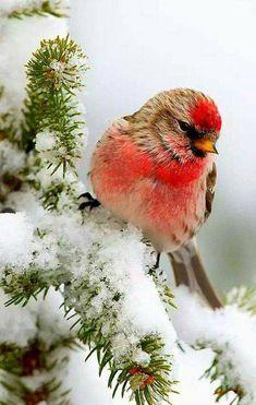 Pretty Birds, Love Birds, Beautiful Birds, Animals Beautiful, Cute Animals, Exotic Birds, Colorful Birds, Bird Pictures, Animal Pictures