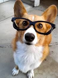 Are you as smart as your dog? Unfortunately quite a few people are not.