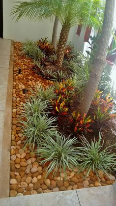 If you live in a dry and arid climate then your desert landscaping is going to take a little more planning than some other parts of the country. desert landscaping will have to work with a plan that includes only plants and trees that Florida Landscaping, Tropical Landscaping, Landscaping With Rocks, Modern Landscaping, Landscaping Plants, Front Yard Landscaping, Landscaping Ideas, Backyard Ideas, Patio Ideas