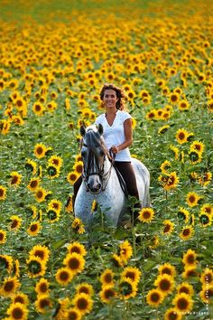 Horse Riding in Sunflower Field
