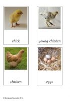 Free printable cards for teaching about the Life cycle of a chicken