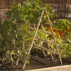 Sturdy trellis is ideal for squash, cucumber, melons and other vining crops. Trellising vines increases air circulation to minimize disease problems. Keeps vines and fruits off soil for a cleaner, better harvest.