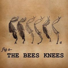 """""""The Bees Knees"""". {Insect Art Illustration, Vintage Inspired Altered Art Word Print, Digital Collage, Entomology, You Are The Bee's Knees. Art Aquarelle, Francisco Goya, Insect Art, Bee Art, Bee Happy, Bees Knees, Bee Keeping, Altered Art, Altered Tins"""