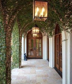 Love this corridor and ivy!