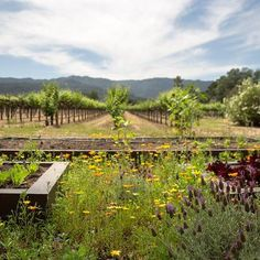 Harvest Inn By Charlie Palmer | St. Helena, Napa Valley Hotel