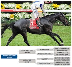 Pedigree of 2010 Melbourne Cup winner, Americain.