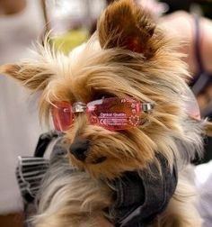 looks like Gypsy...she needs those shades!