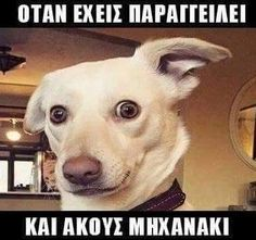 16 Ideas funny photos of dogs pets Funny Animal Pictures, Funny Photos, Funny Animals, Cute Animals, Funny Cute, Hilarious, Dog Memes, Laughing So Hard, Just For Laughs