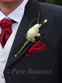 Google Image Result for http://www.purebotanics.co.uk/images2/tulip-buttonhole.jpg