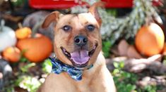 Imagine spending five years of your life sitting in a prison cell never having committed a crime. This has been the fate of Cooper, an eight-year-old male Mountain Cur. He arrived at Abandoned Pet Rescue in 2013 and remains there, unwanted.Although Cooper is in the largest no kill shelter in Fort Lauderdale, Florida and well …